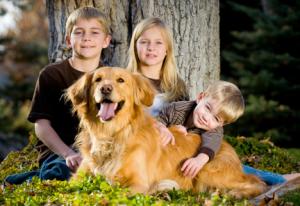 Человека роль собаки в жизни человека