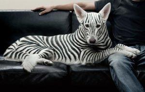 короткошерстные породы собак для квартиры с фото