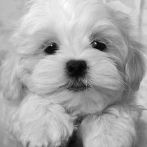 Собак милые маленькие собачки